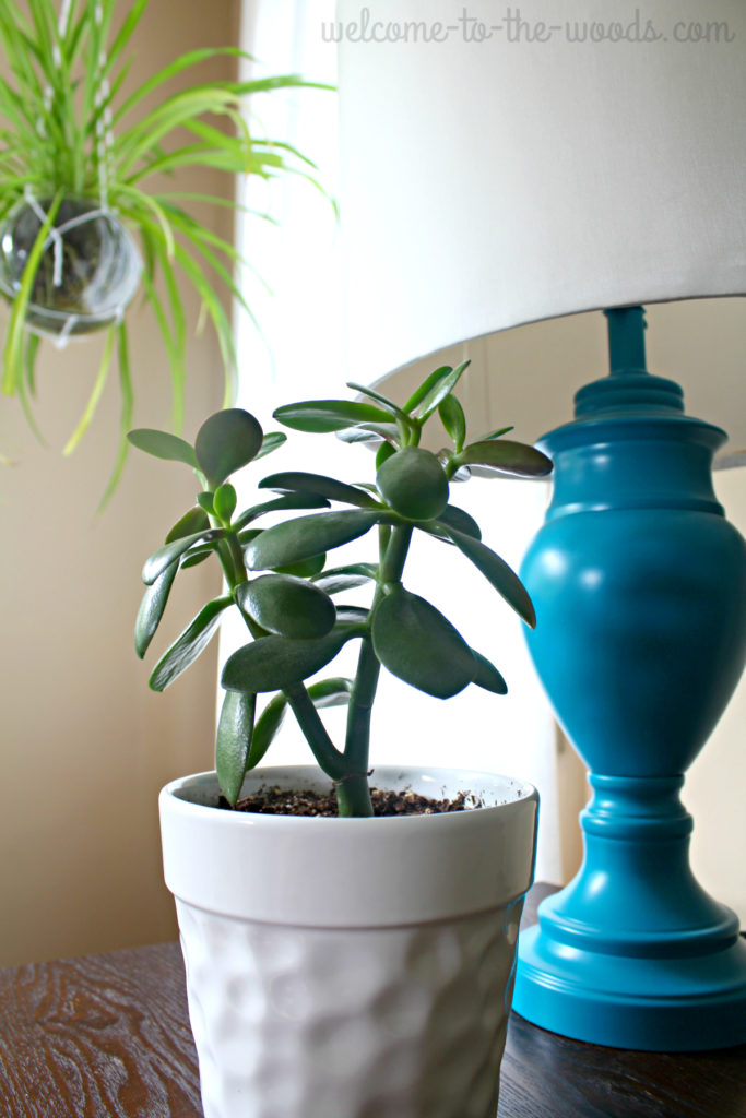 Adding plants to room design is considered a neutral and can be paired with any color.