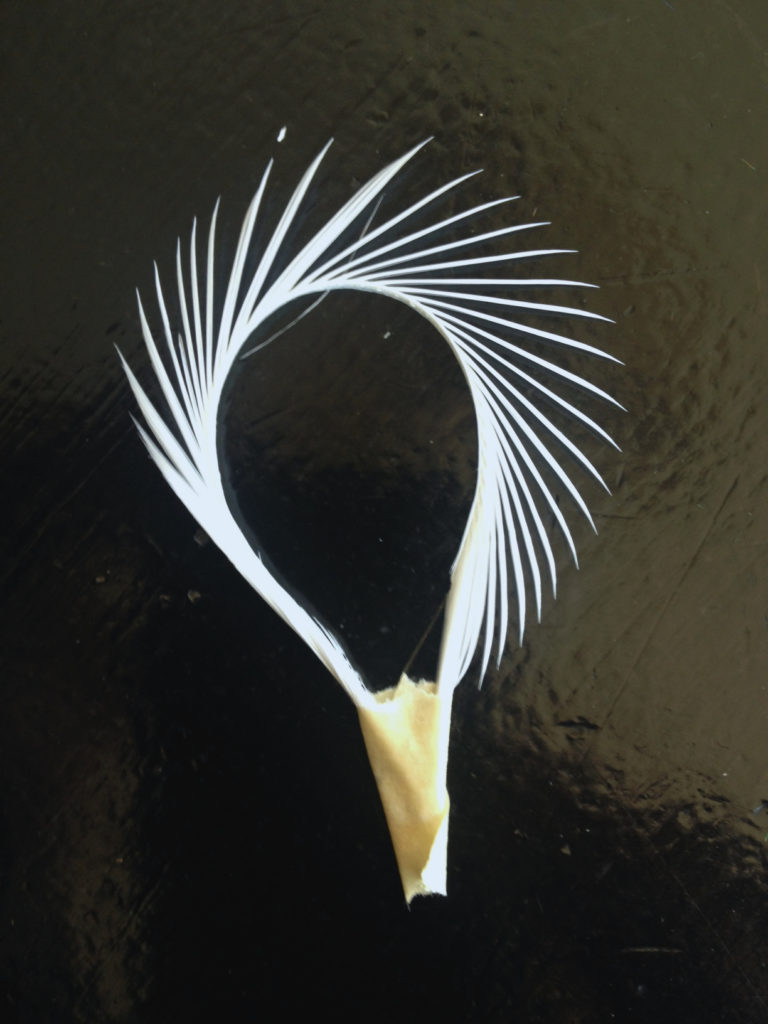 Folding a feather and taping it down can reveal a whole new shape!