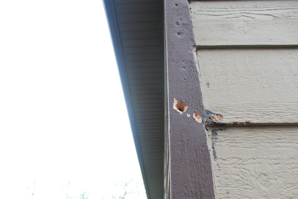 Wood pecker holes in siding on house