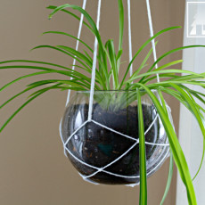 Love this look for the corner of your living room! Hang a plant with this simple modern macrame plant hanger and a fish bowl!