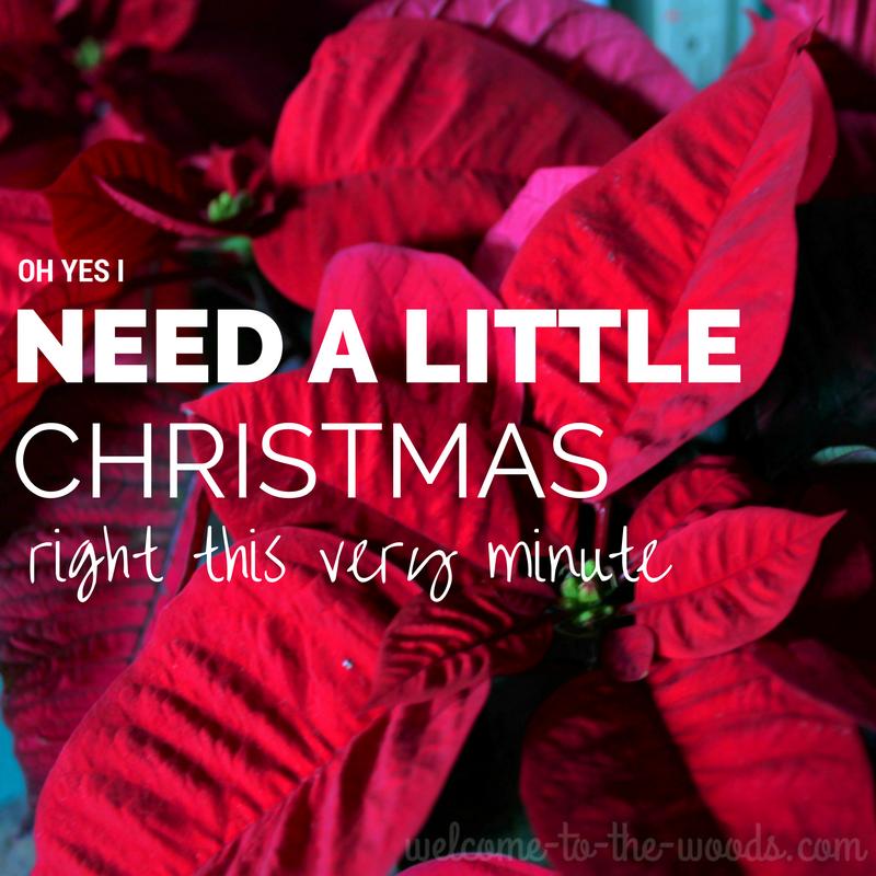Poinsettia I need a little Christmas blog image
