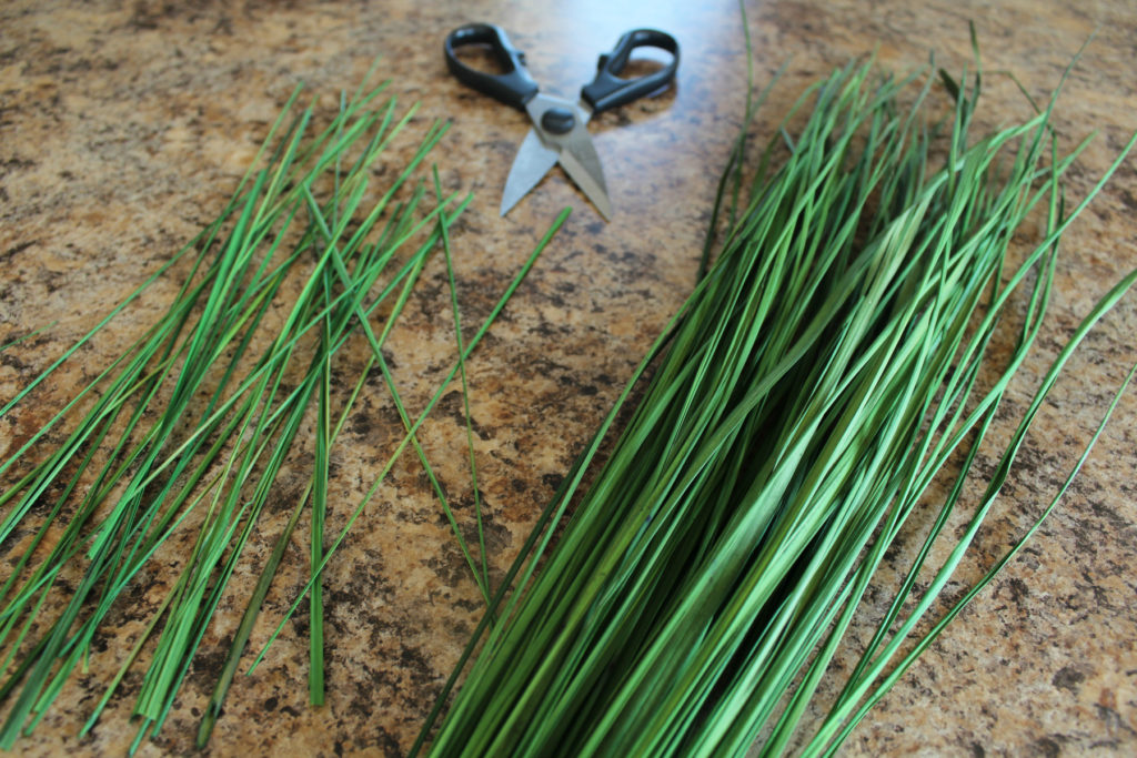 Cutting grass for the faux potted plant