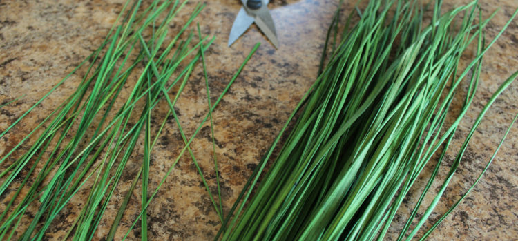 Easy Summer Craft: Potted Grass