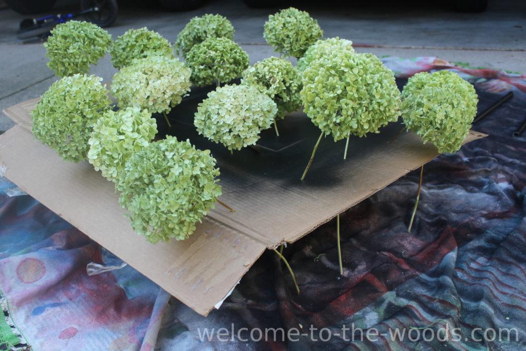 Spray painting hydrangea blooms