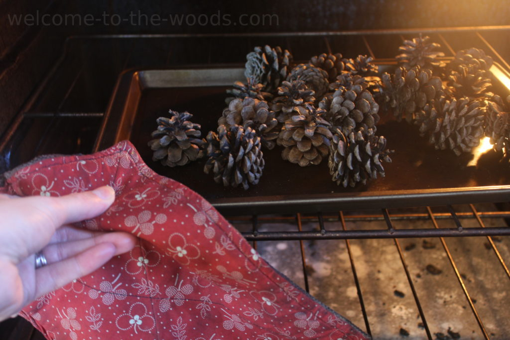Bake pine cones for 15 minutes at 300 degrees to kill any bugs, clean out the dirt easier, and open them up fully.